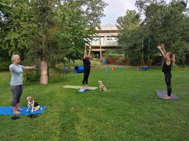 Yoga im Hundegarten